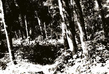 Antique Treescape