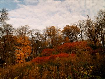 Owen Park Autumn Red