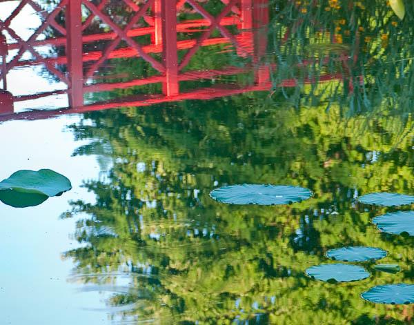 Reflection in Pond at Allen Centennial Garden in Madison Wisconsin