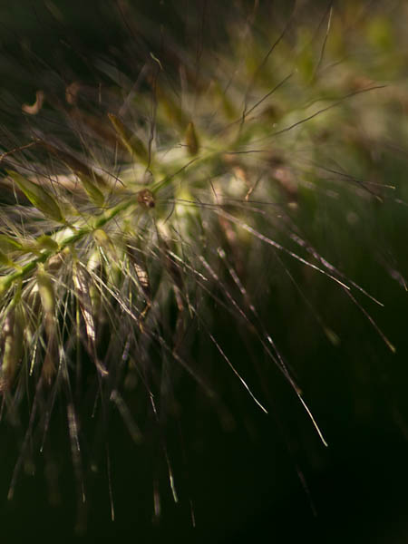 Macro photograph of grass
