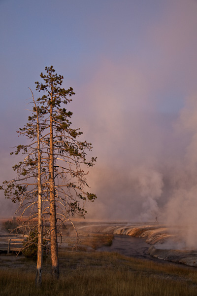 Trees at Sunrise in Black Sand Basin at Yellowstone National Park