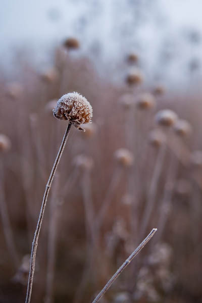 Seedheads with Bokeh at Owen Conservation Park in Madison, Wisconsin