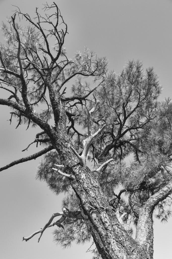 Volcanic Tree © 2014 Bo Mackison